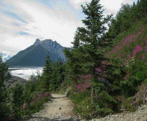 Trail to the Glacier