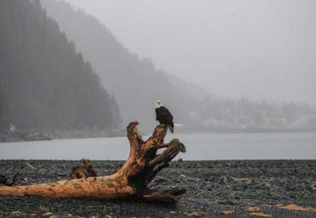 website eagle on beach